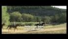 Cadê os Morgan? - trailer legendado (HD) - 26.03 Nos Cinemas