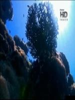 O Encanto do Azul Profundo - Poster / Capa / Cartaz - Oficial 1