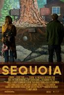 Sequoia (Sequoia)