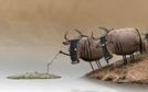 Wildebeest (Wildebeest)