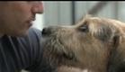 A Questão Animal: A História do Bem Estar Animal (trailer) novo
